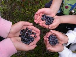 Three Sets of Hands Holding Huckleberries